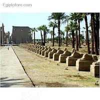 Vista_de_la_avenida_de_esfiges_del_templo_de_Luxor.jpg