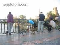 Pescando_en_el_puente_Al-_Galaa.jpg