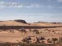 camells.JPG