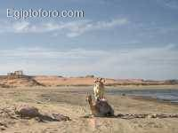 camells_nubis.JPG