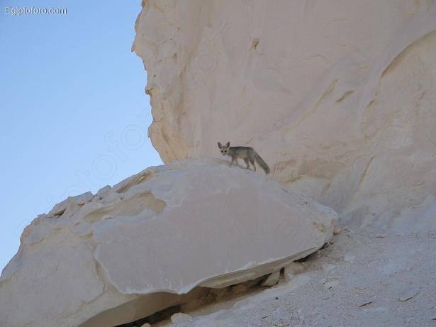 white_desert-8