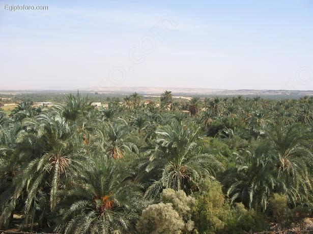 Bahariya0