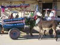 Burro-taxi_en_Siwa.jpg