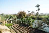 Valle-del-Nilo-001.jpg