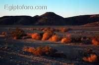 14-desierto-oriental-arabico.jpg