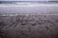 5-playa-mar-rojo.jpg