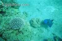 12-arrecife-marsa-alam.jpg