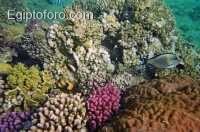 18-arrecife-marsa-alam.jpg
