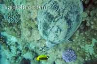 2-arrecife-marsa-alam.jpg