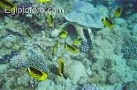 3-arrecife-marsa-alam.jpg