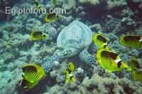 5-arrecife-marsa-alam.jpg