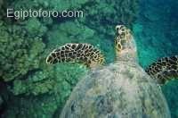 7-arrecife-marsa-alam.jpg