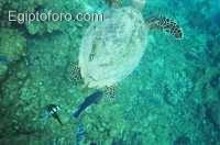 8-arrecife-marsa-alam.jpg