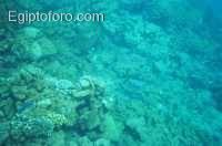 9-arrecife-marsa-alam.jpg