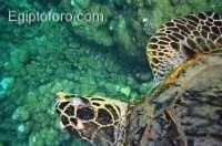 arrecife-marsa-alam.jpg